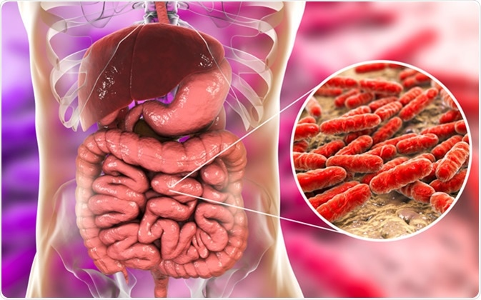 Normal flora of small intestine, bacteria Lactobacillus. 3D illustration Credit: Kateryna Kon / Shutterstock