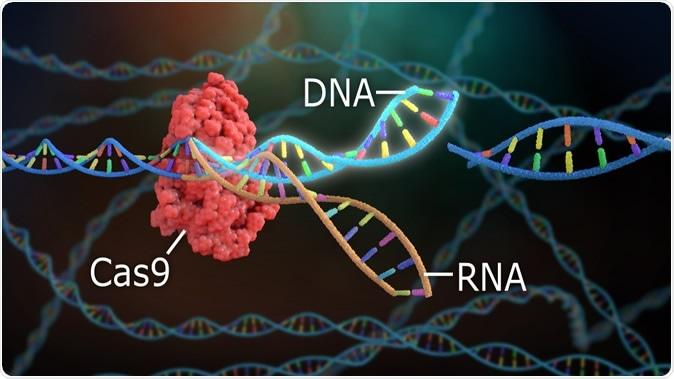 3D Rendering Crispr DNA Editing. Image Credit: Nathan Devery / Shutterstock