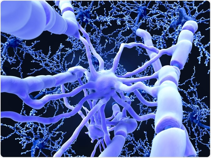 Oligodendrocyte form insulating myelin sheaths around neuron axons in the central nervous system. Myelin increases the impulse speed and decreases the capacitance of the axon membrane. 3d rendering - Illustration Credit: Juan Gaertner / Shutterstock