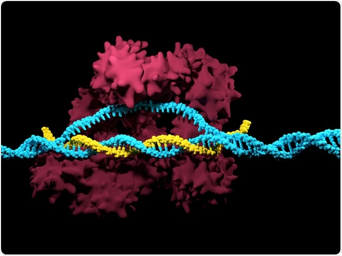 CRISPR-Cas9. Image Credit: Meletios Verras