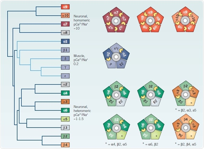 Heterogeneity of vertebrate nAChRs.