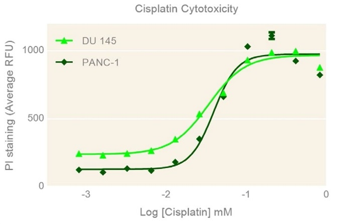 Concentration-dependent cisplatin cytotoxicity.