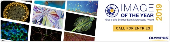 Olympus launches first Global Image of the Year Life Science Light Microscopy Award