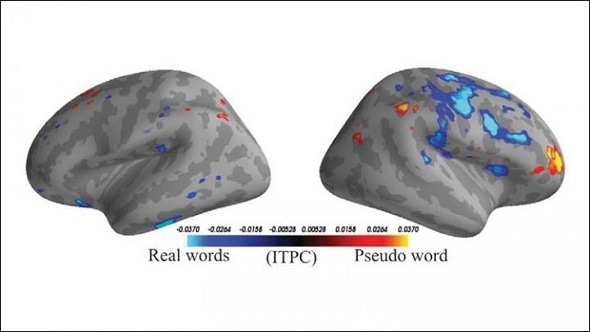 Study uses machine learning algorithms to classify word type based on brain activity