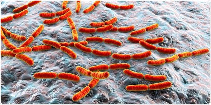 Bacteria Lactobacillus, 3D illustration. Image Credit: Kateryna Kon / Shutterstock