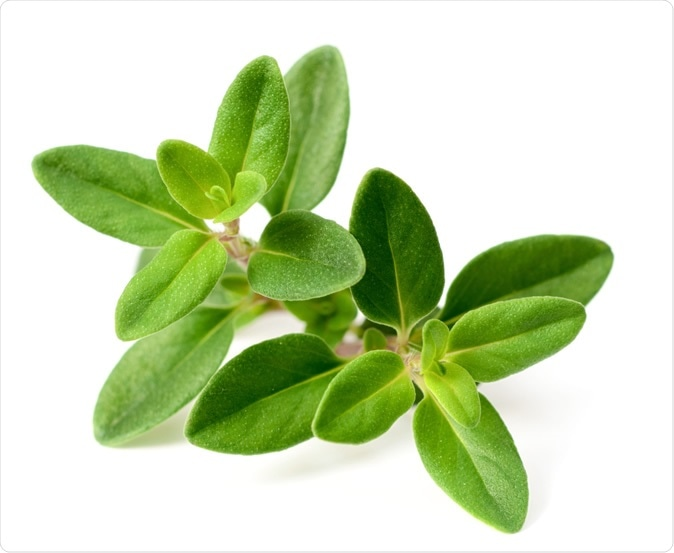 Thyme herb. Image Credit: AmyLv / Shutterstock