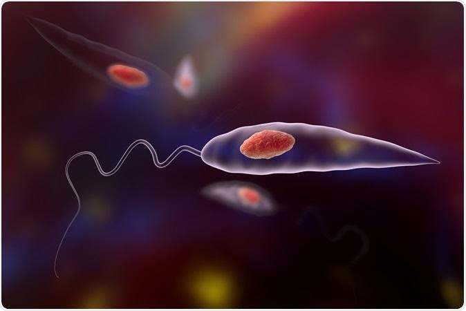 Leishmania parasites which cause leishmaniasis, 3D illustration - Credit: Kateryna Kon / Shutterstock