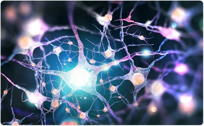 Neural network Human nervous system. 3D illustration Credit: Andrii Vodolazhskyi / Shutterstock