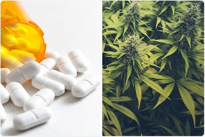 Les cannabis de mélange avec des opioids pour la douleur enregistrent une inquiétude plus élevée, dépression