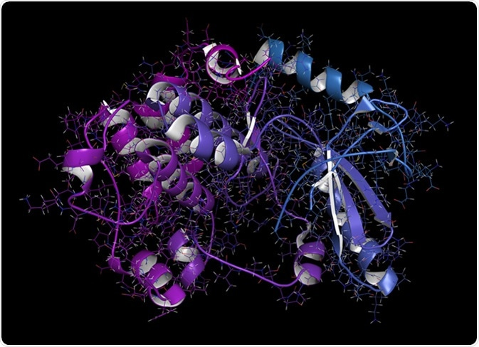 MEK1 or mitogen-activated protein kinase kinase 1 (rabbit) protein. MEK inhibitors are used in treatment of cancer and include cobimetinib and trametinib. 3D rendering from pdb entry 5kkr. - Illustration Credit: molekuul_be / Shutterstock