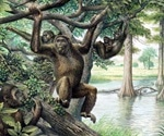 A new view of human evolution via Hungary