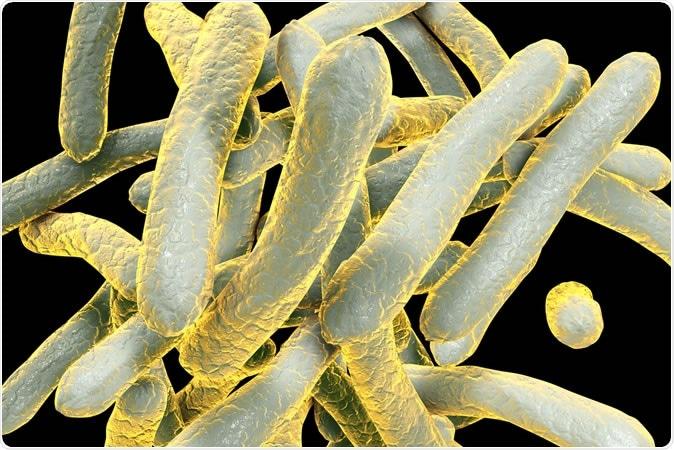 3D illustration of bacterium Mycobacterium tuberculosis.  Image Credit: Kateryna Kon / Shutterstock