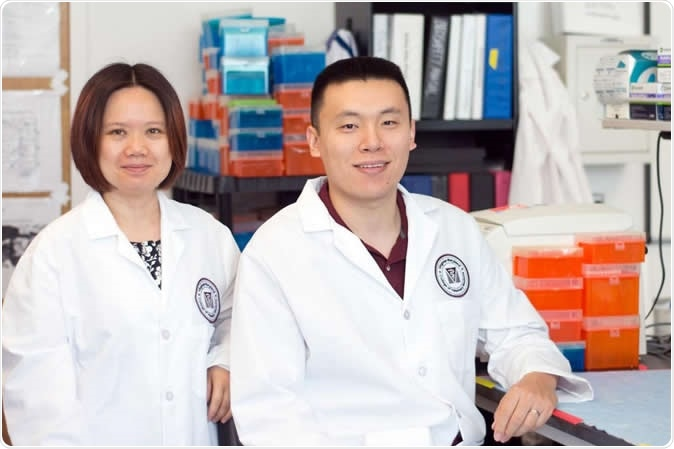 Lead authors Xin M. Luo, associate professor of immunology in the Department of Biomedical Sciences and Pathobiology, and Qinghui Mu, formerly a postdoctoral fellow in the department. Photo by Emily Koth. Image Credit: Virginia Tech