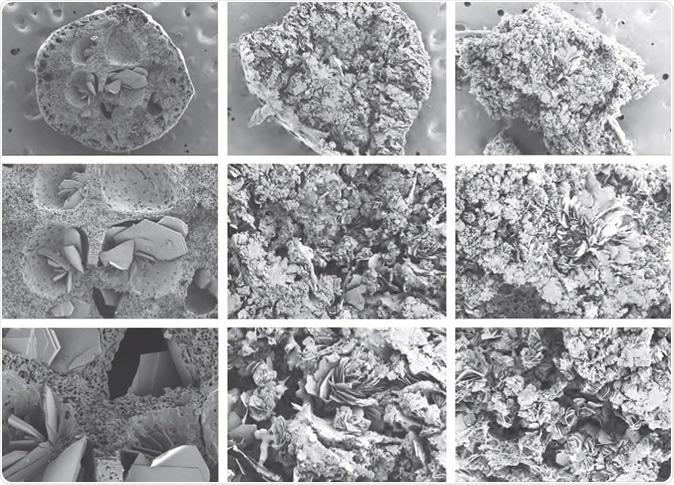 SEM cross-section images of implants after drug release for 30 days.