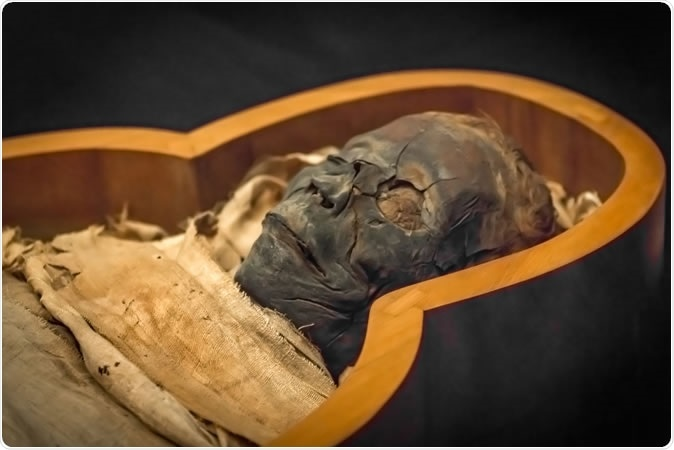 Ancient mummy in the sarcophagus, close-up. Image Credit: Anton Watman / Shutterstock
