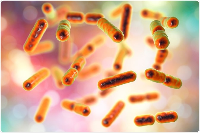 Bacteria Bacteroides fragilis, one of the major components of normal microbiome of human intestine, 3D illustration Credit: Kateryna Kon / Shutterstock