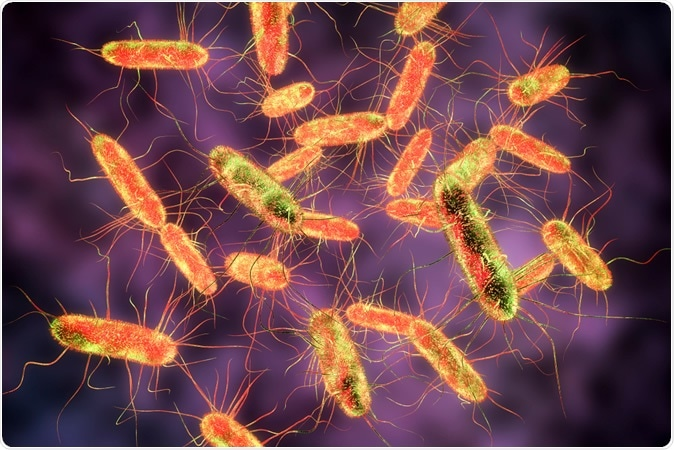 Salmonella bacteria. S. typhi, S. typhimurium and other Salmonella, Gram-negative rod-shaped bacteria, 3D illustration - Illustration Credit: Kateryna Kon / Shutterstock