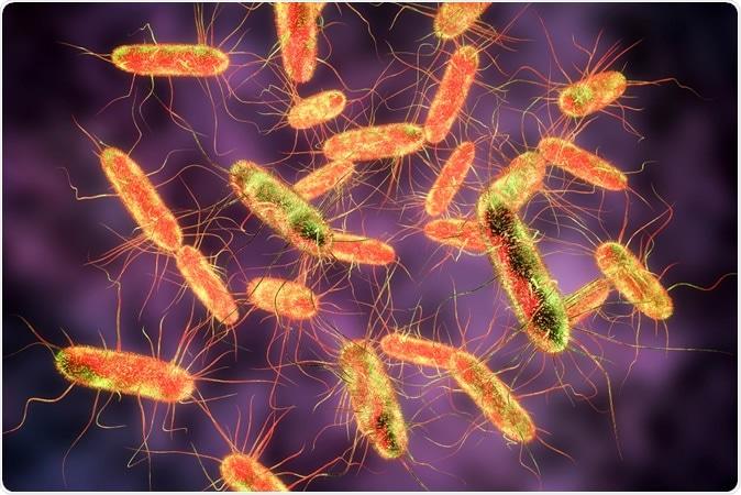 Bactérie Salmonelle. Typhus de S., S. typhimurium et toute autre salmonelle, bactéries en forme de tige gramnégatives, 3D illustration - crédit d