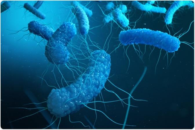 Protéobactérie - crédit d