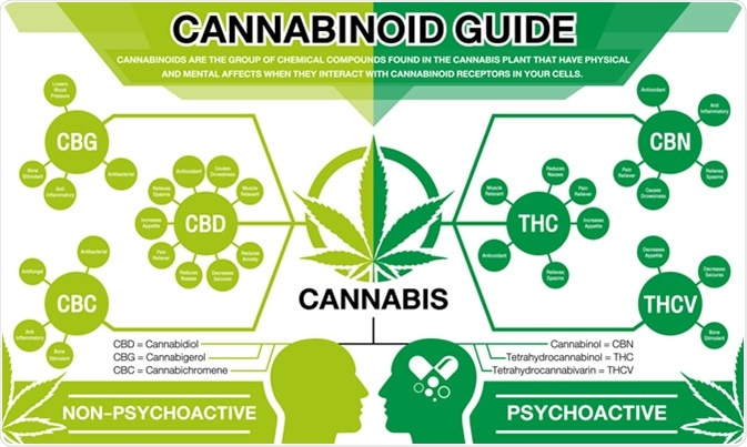 Cannabinoid Guide. Credit: ThanasStudio / Shutterstock