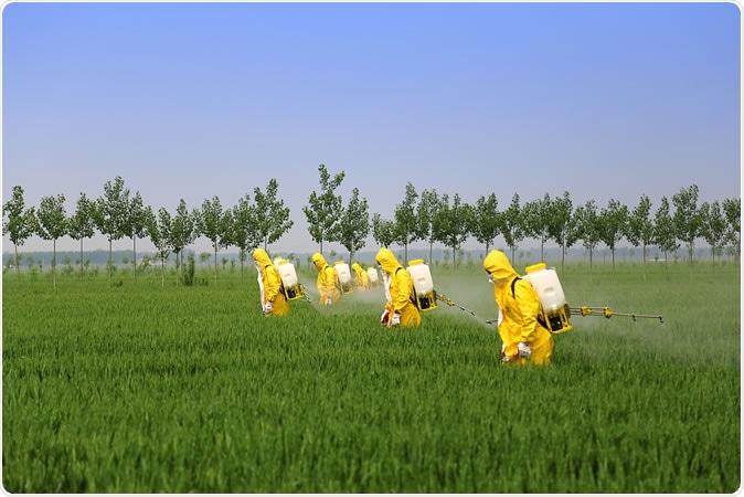Farmers spraying pesticide in wheat field. Image Credit: Jinning Li / Shutterstock