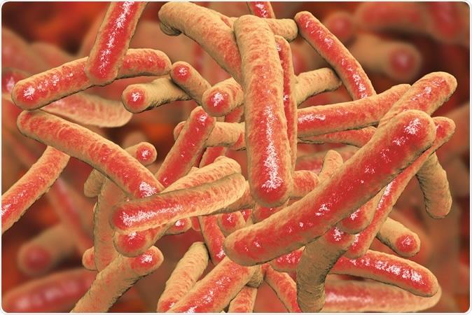 Mycobacterium tuberculosis dei batteri, l