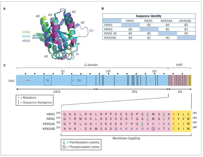 Human RAS proteins