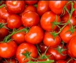 Anti-cancer effects of lycopene in tomatoes canceled out by iron-rich foods