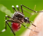 Asian tiger mosquito does not pose a major risk for Zika virus epidemics