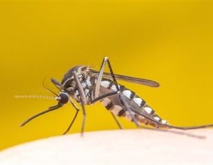 Researchers develop models to predict epidemics of yellow fever, other mosquito-borne diseases