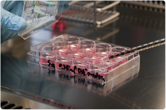 Stem cells in 12 well plate