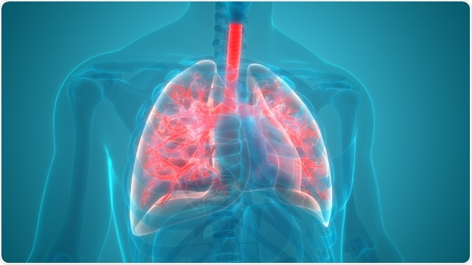 Lungs outlined in red