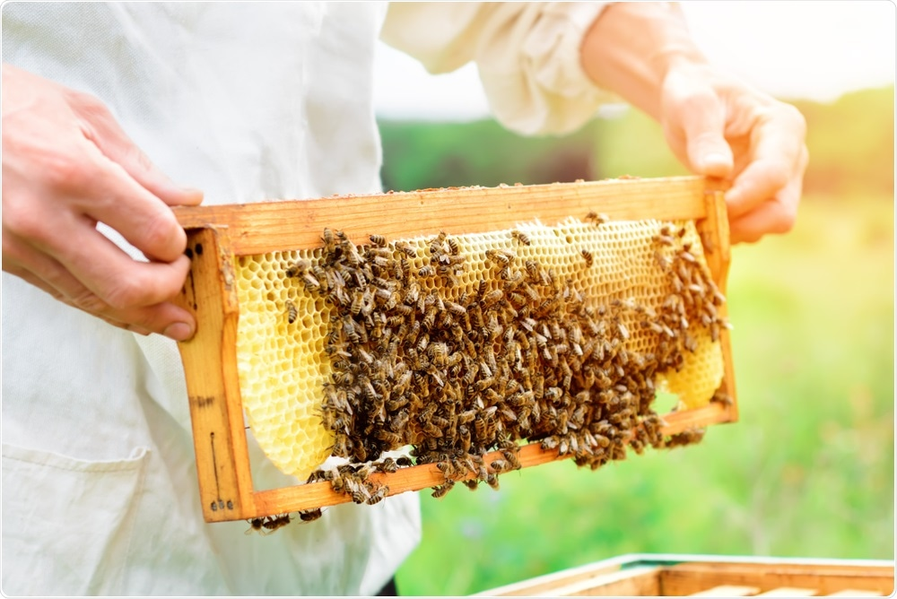 Beekeeper obtaining honey from hive
