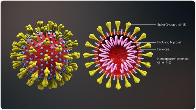 Diagrama de Coronavirus