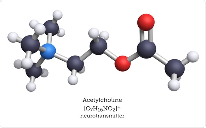 Acetylcholine is a neurotransmitter released by nerve cells to send signals to other types of cells. Primarily, acetylcholine is associated with motor neurons and the activation of muscle function. Image Credit: Molecular Arts / Shutterstock