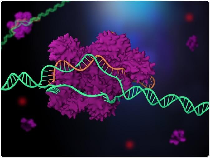 3D illustration of CRISPR-Cas9 genome editing system. Image Credit: Meletios Verras / Shutterstock