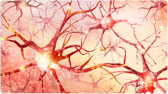 A genome-wide analysis has revealed genes that are essential for neuron survival, as well as genes that protect against the effects of Huntington's disease. Image Credit: Romanova Natali / Shutterstock