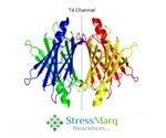Amyloid Diseases and the Role of Transthyretin (TTR)