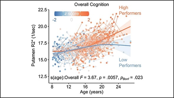 Brain iron needed for healthy cognitive development, research suggests