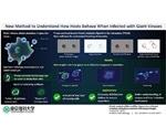 New method reveals how giant viruses infect amoeba