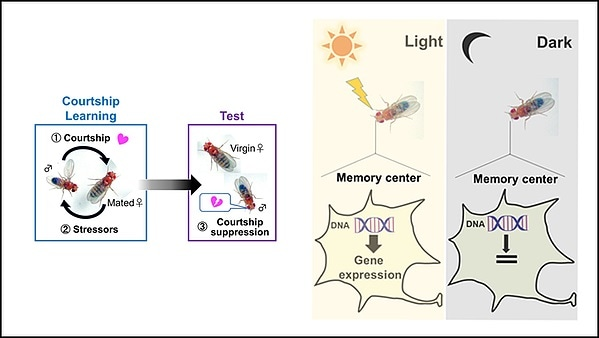 Environmental light required for maintaining long-term memories