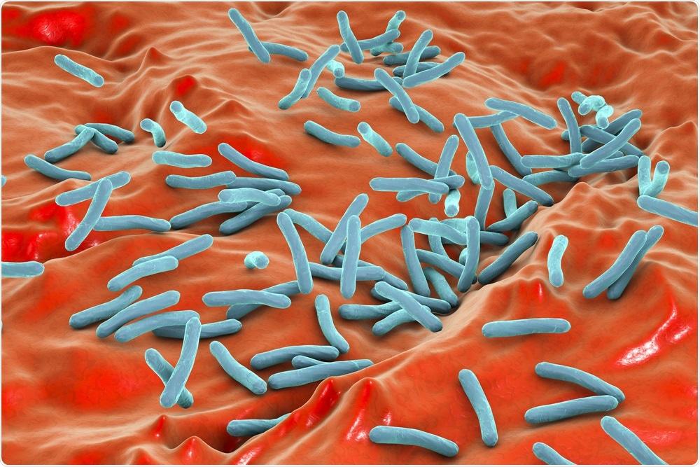 Bacille de la tuberculose