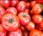 Investigating the Stability of Lycopene Formulations