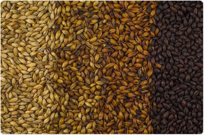 Four different types of barley malt. (Image Credit: ThiagoSantos / Shutterstock.com)