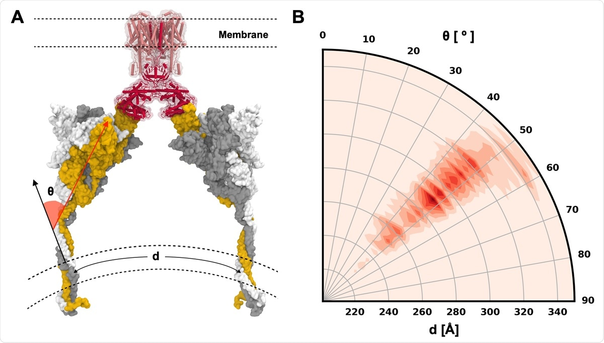 S protein configurations competent for ACE2 binding. (A) Illustrative snapshot of S protein-ACE2-B0AT1 complex. Three individual chains of S protein are colored in yellow, gray, and white, and ACE2 and B0AT1 are represented as red and pink, respectively. (B) Distribution of tilting angle (θ) as a function of the arc length (d) between the centers of mass (COMs) of TM domains.