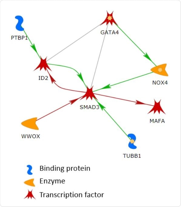 The largest connected network in the list of 144 genes. The line colors indicate the activation (green), inhibition (red), and unspecified (grey) effects.