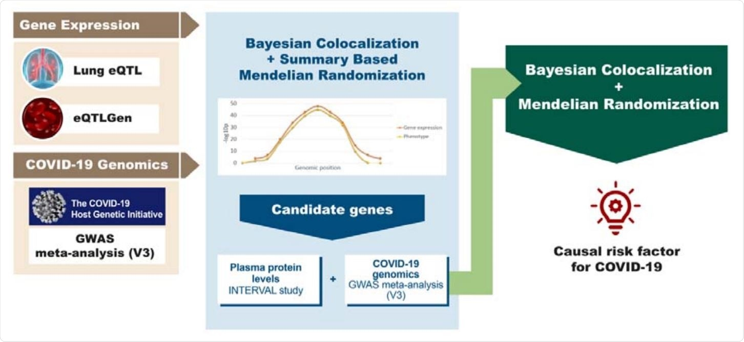 Study overview. The diagram summarizes the genomics datasets and analytic pipeline of the study. First, publicly available -omics datasets were obtained, which were later processed using integrative genomics (IG) methods (Bayesian Colocalization and Summary-based Mendelian Randomization) to identify potential candidate genes for COVID-19 phenotypes. Lastly, using a Bayesian Colocalization and Mendelian Randomization approach we explored the causal association between the plasma protein levels of the most promising candidate gene and COVID-19.