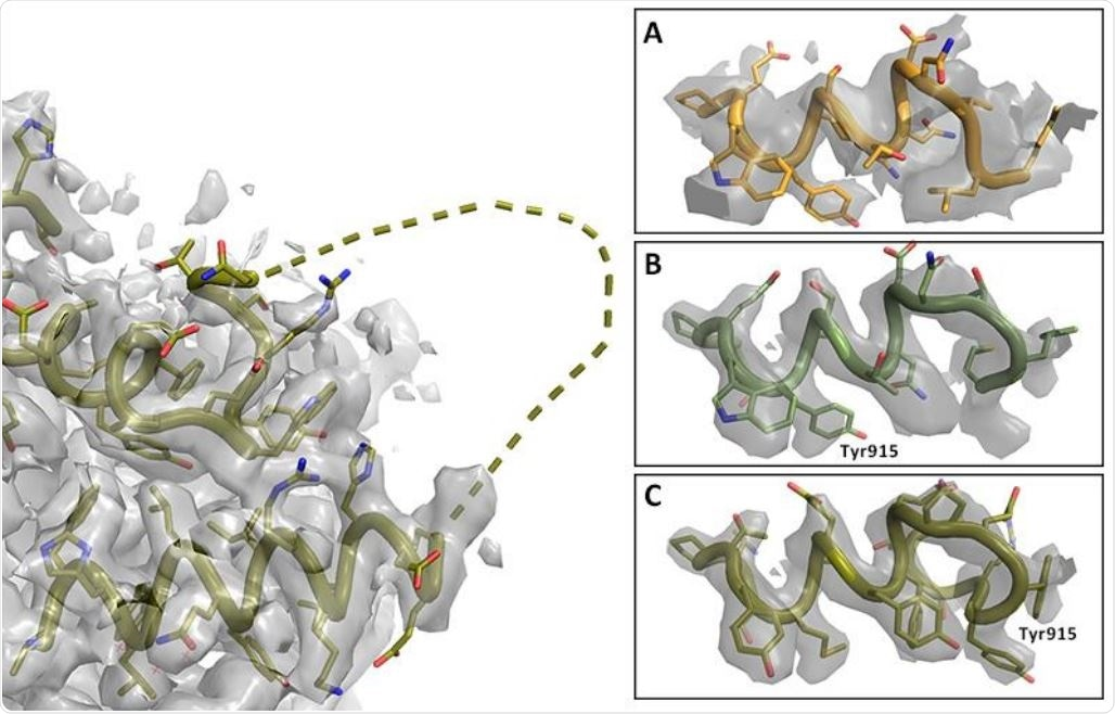 Registry shift in C-terminus of RNA Polymerase. Left: Overview with missing loop shown as dashed line (PDB entry 7BV2); map at 2.4σ. Right: Details of C-terminal helix at 5σ. A. Lower resolution map and model PDB 6NUS. Judging the side chain fit is difficult. B. Higher resolution map and model 7BV2 as deposited; the side chain fit is suboptimal. C. Amended 7BV2 structure; the side chains now fit the density. The register shift is indicated by Tyr915.