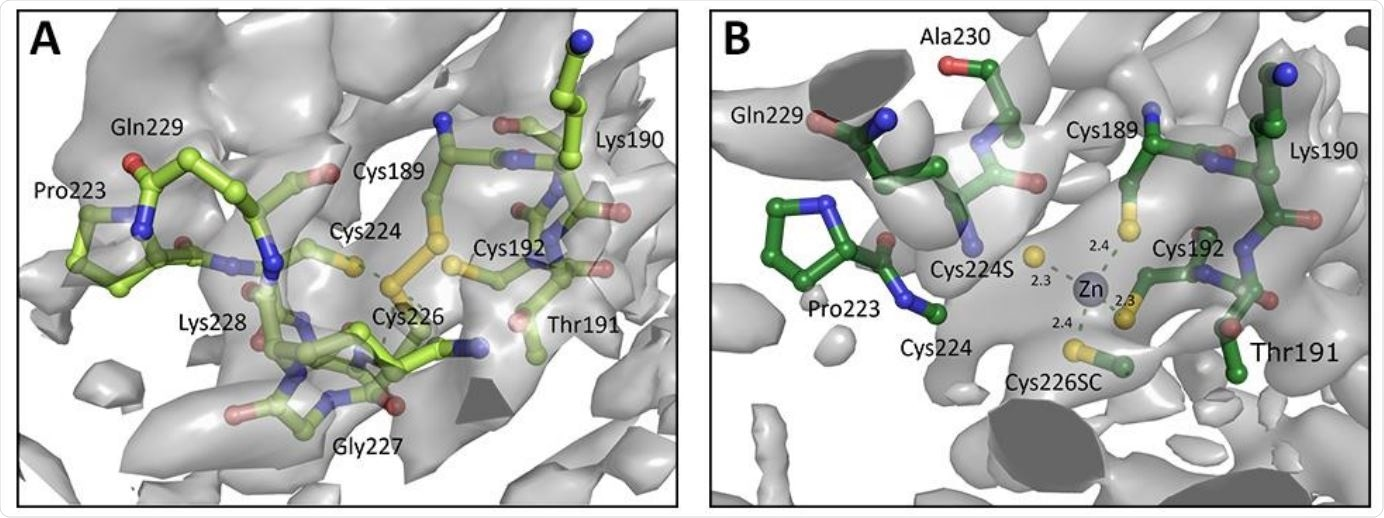 A. Chain A of zinc finger from PDB entry 6W9C as deposited, with Cys189 and Cys226 forming a disulphide bond instead of a Zn binding site. B. Re-modelled structure with zinc binding site, utilising 3-fold NCS, prior knowledge about coordination chemistry, and increased geometry weights to improve the map. Electron density is displayed as an isosurface contoured to 1σ.