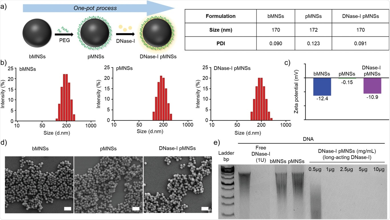 Physicochemical characterization of pMNSs. a) Preparation of DNase‐I pMNSs. b) Size distribution of bMNSs, pMNSs, and DNase‐I pMNSs. c) Zeta potentials of bMNSs, pMNSs, and DNase‐I pMNSs. d) Scanning electron microscopy (SEM) images of bMNSs, pMNSs, and DNase‐I pMNSs (scale bar: 500 nm). e) Migration profile of pure DNA after digestion with free DNase‐I, pMNSs, and bMNSs, as well as various amounts of DNase‐I pMNSs. pMNSs, PEG‐coated melanin‐like nanospheres; bMNSs, bare bioinspired melanin‐like nanospheres.